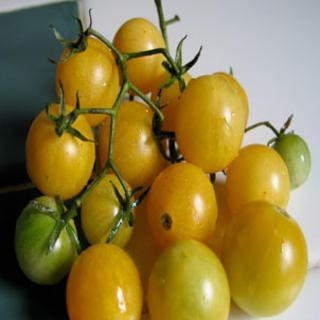 Amber Colored Tomato