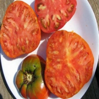 Aker's West Virginia Tomato