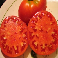 Blue Ridge Mountain Tomato
