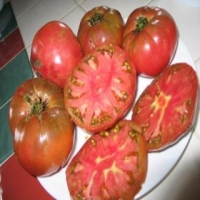 German Black Tomato