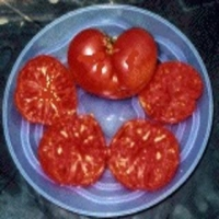 Heart of the Bull Tomato
