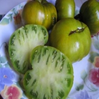 Max's Large Green Tomato