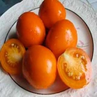Roughwood Golden Plum