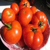 Sioux Tomatoes in a Bowl
