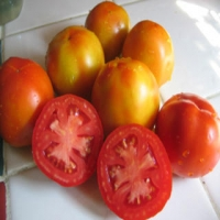 Sub-Arctic Plenty Tomatoes - Sliced and Whole