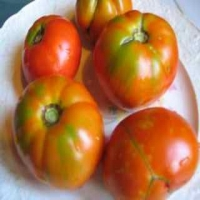 Sugar Beefsteak Tomatoes - Whole on a Plate