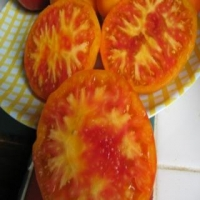Williams Striped Heirloom Tomatoes