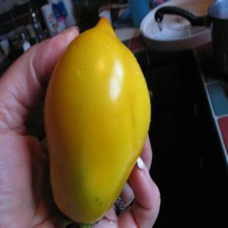Russian Lime Tomato