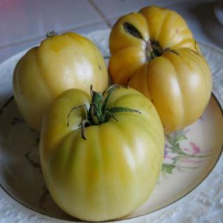 Stetson Yellow Tomatoes - Whole on a Plate